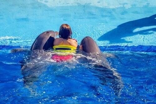 Donna nuota con delfini