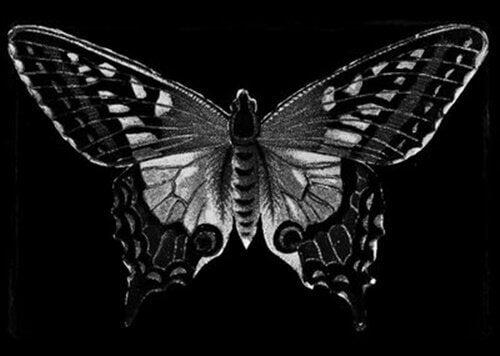 Farfalla nera