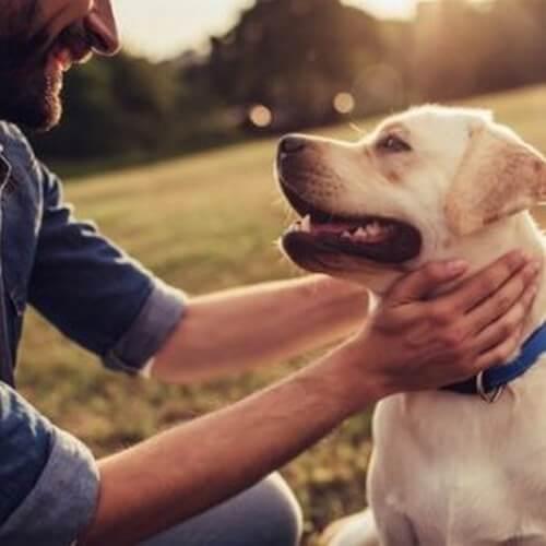 Storie di cani che hanno commosso il mondo