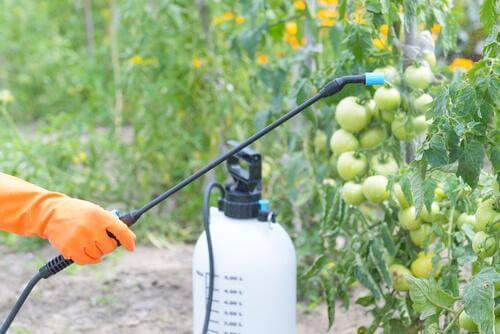 Uso dei pesticidi in agricoltura