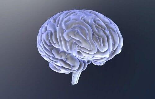 cervello e biopsicologia