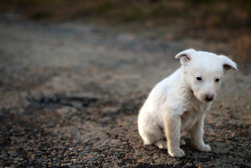 Gli animali soffrono come noi
