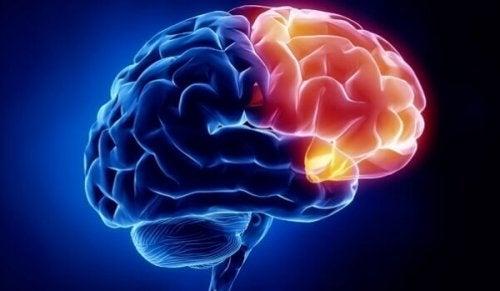Area cerebrale della colpevolezza