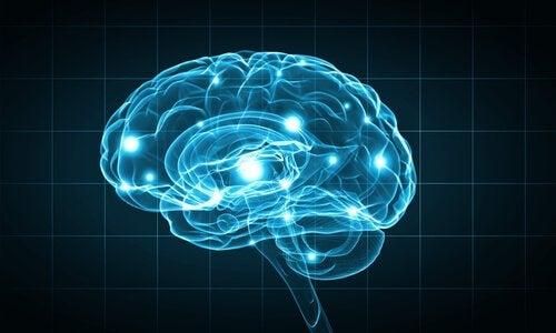 Cervello illuminato di azzurro