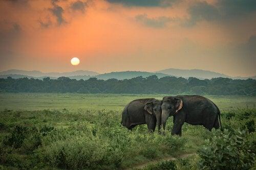 La tristezza degli elefanti, una storia vera