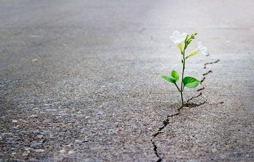 Fiore che cresce nell'asfalto