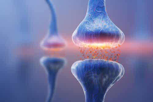 Tipi di sinapsi: la comunicazione neuronale