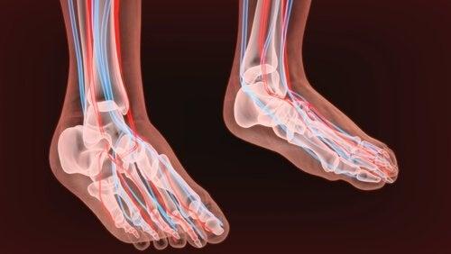 I nervi dei piedi