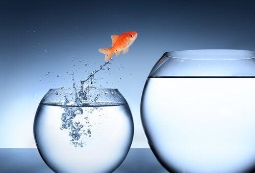 Pesce che salta da una boccia