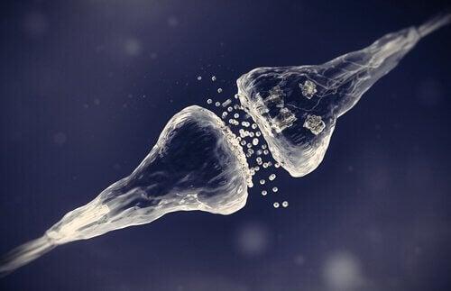 Sinapsi chimica tra i neuroni