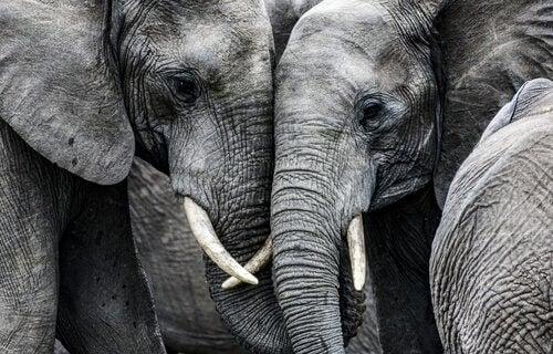 La tristezza degli elefanti insegna molte cose