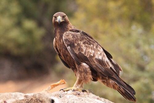 Un falco di profilo