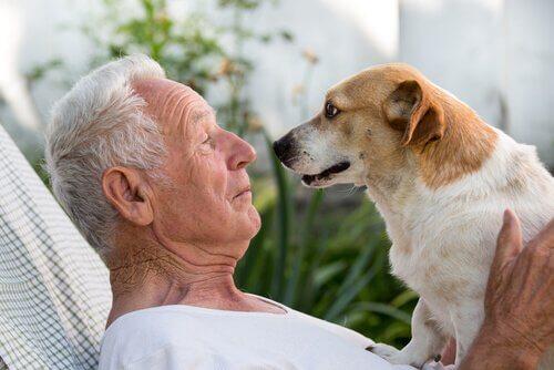 Uomo anziano e cane