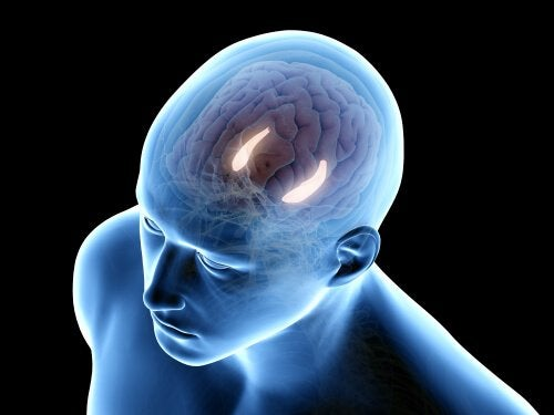 Cervello illuminato ippocampo
