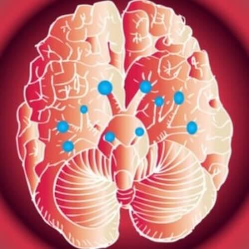 Kranijalni živci i njihove funkcije Cervello-nervi-cranici