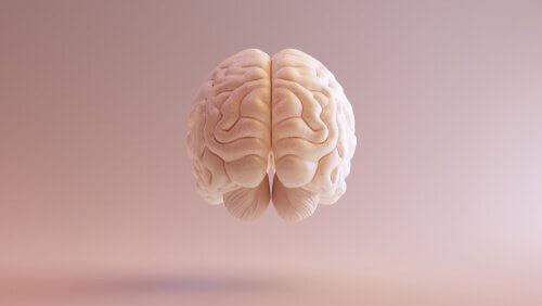 Cervello storia delle neuroscienze