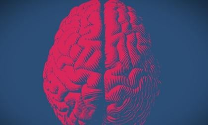 Rappresentazione del cervello umano