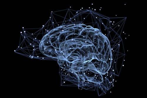 Cervello connessioni