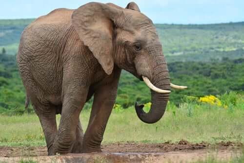 I sei saggi e l'elefante