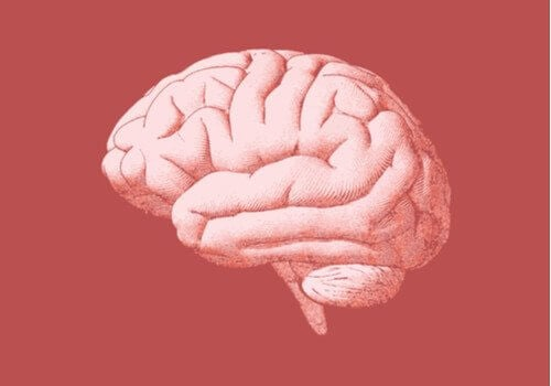 Cervello e neurobiologia della dipendenza