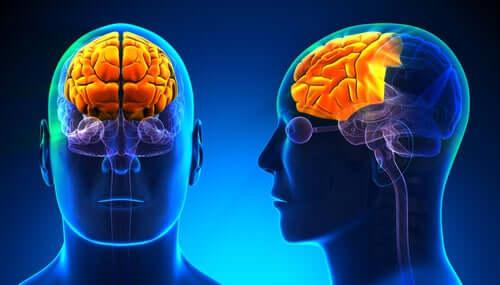Neurobiologia dell'alcolismo, cervello con lobo frontale illuminato