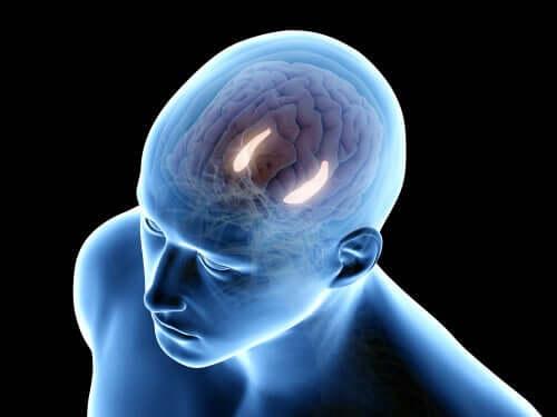 Cervello memoria dichiarativa