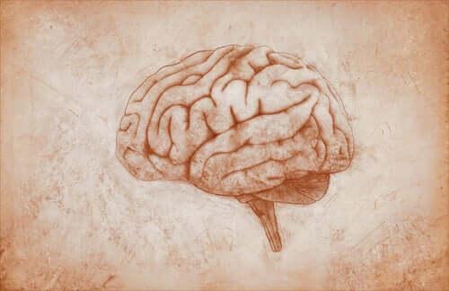 Disegno del cervello umano