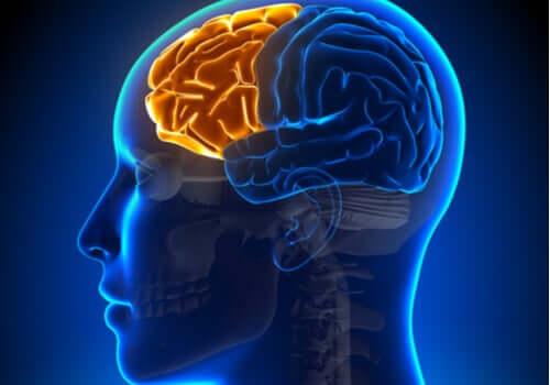 Dysexecutive ili frontalni sindrom Lobo-frontale-illuminato