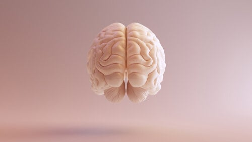 Representación cerebral