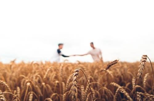 Cerchio degli uomini in un campo di grano