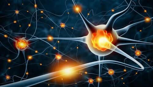 Plasticità neuronale con neuroni in connessione