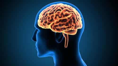 Victor Leborgne, il caso che ha cambiato le neuroscienze