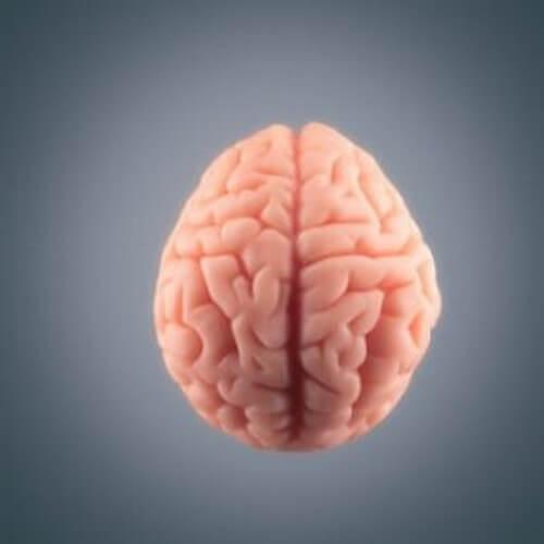 Cosa accade al cervello prima di morire?