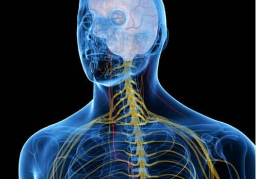 Profilo del sistema nervoso