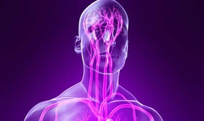 Rappresentazione del sistema nervoso parasimpatico