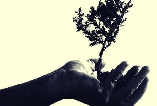 Un albero in mano