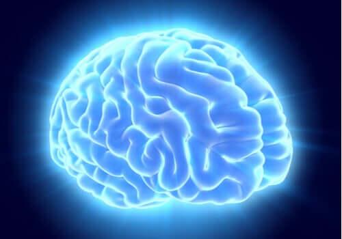 Cervello di colore blu