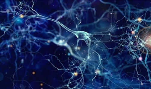 Reti di neuroni