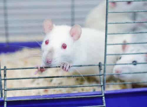 L'incredibile esperimento del Rat Park