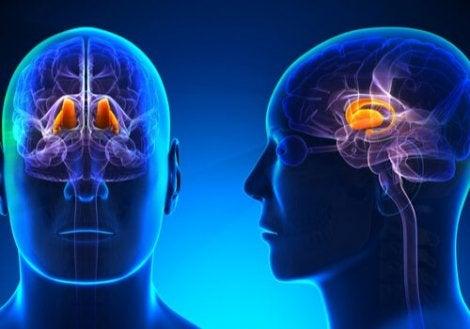 La funzione del talamo rispetto la percezione del dolore