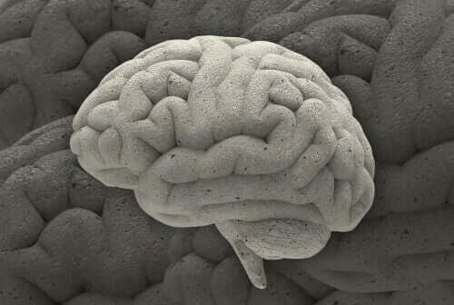 Fenomeni affascinanti di neurobiologia