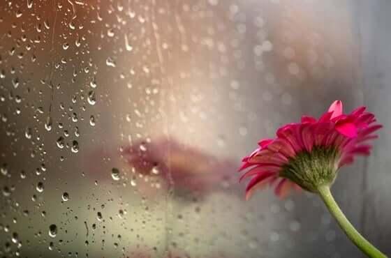 Fiore e pioggia