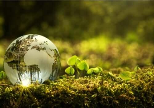 Proteggere l'ambiente: come contribuire?
