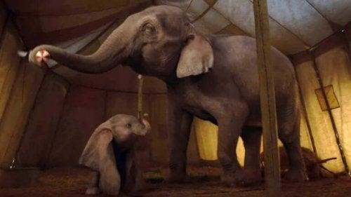 Scena remake Dumbo