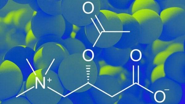 Formula chimica della acetilcarnitina