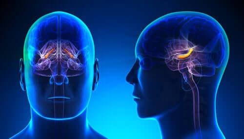 Grafica del cervello di un uomo con ippocampo evidenziato