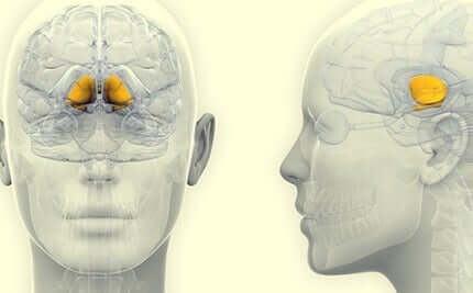 Gangli della base nel cervello
