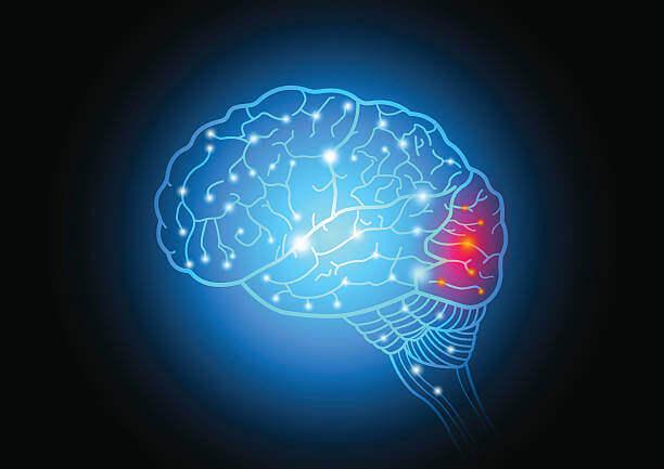 Lobo occipitale nel cervello umano
