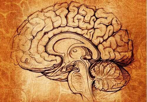 Nucleo lenticolare, il centro dell'apprendimento