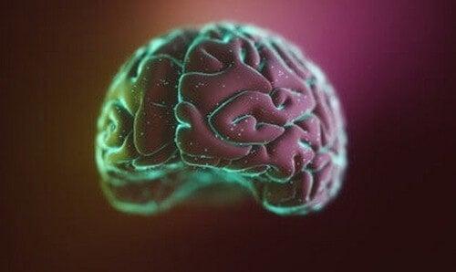 La neocorteccia: struttura e funzioni